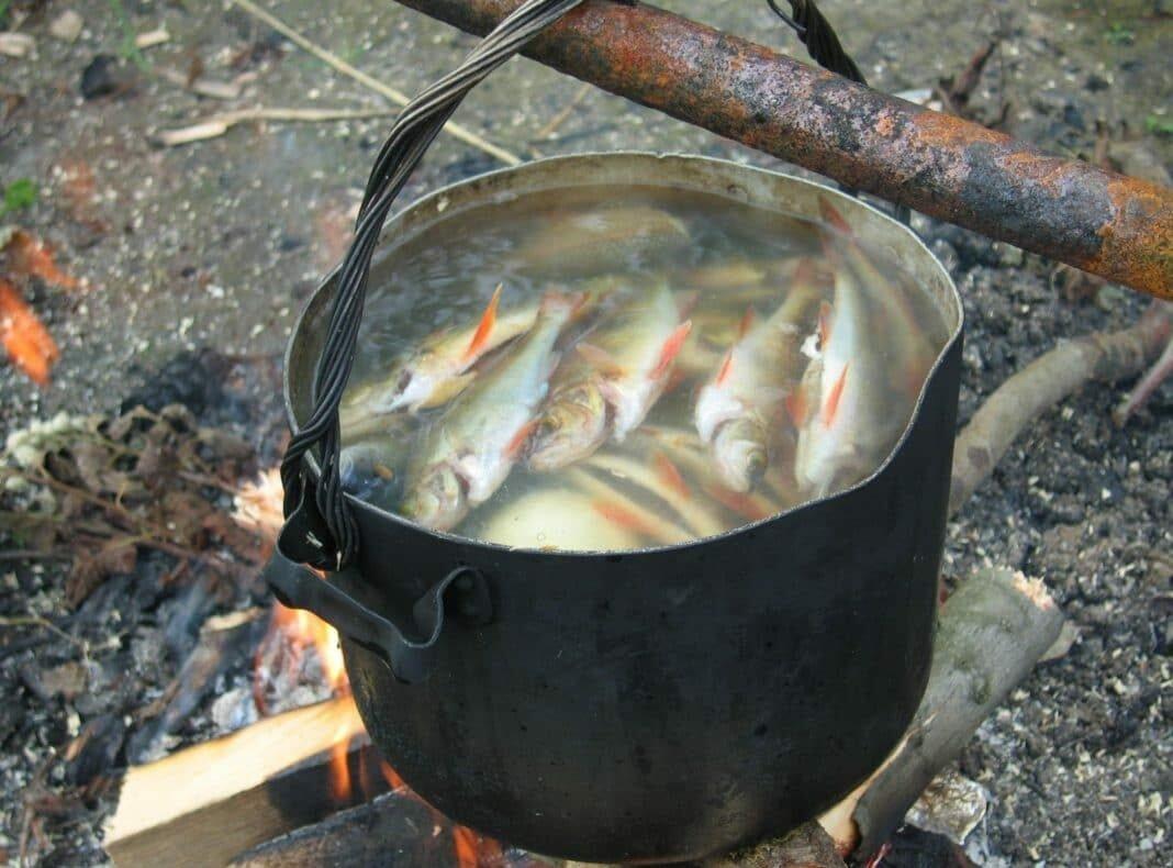 Рецепт ухи из речной рыбы на костре