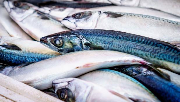 Как приготовить скумбрию на мангале в решетке. рецепты запеченной рыбы + маринад
