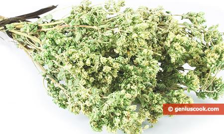 Приправа орегано: что это за специя, для чего используется в кулинариии, куда добавлять такую траву, чем можно её заменить, как выглядит душица, а также ее фото