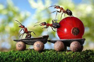 Лучшее средство от того, как навсегда избавиться от муравьев на даче и огороде
