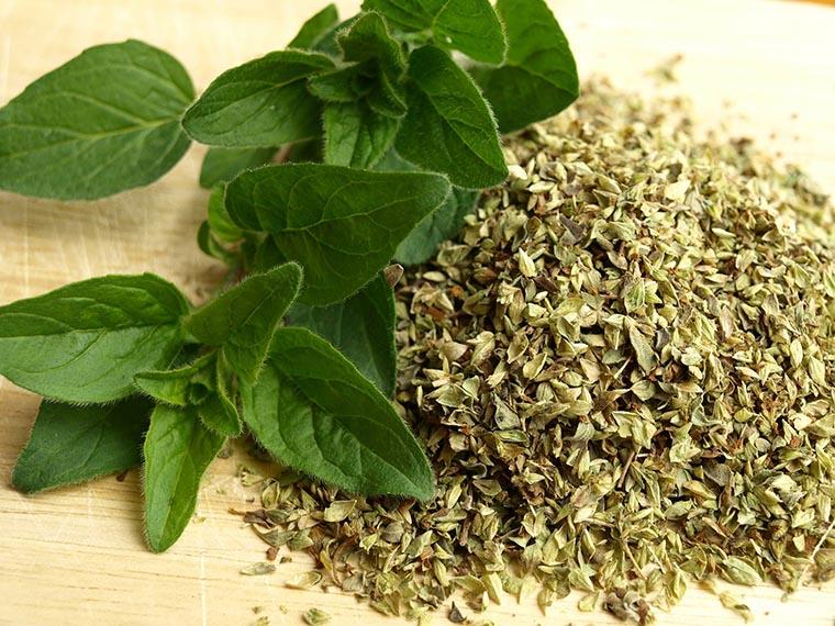 Душица (орегано) - лечебные свойства и применение | spicesguide.ru