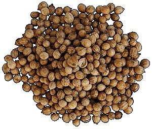 Кориандр (кинза) описание, химический состав, полезные свойства и противопоказания растения и приправы