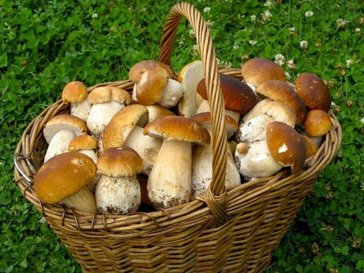 Где любят расти лисички — ягоды грибы