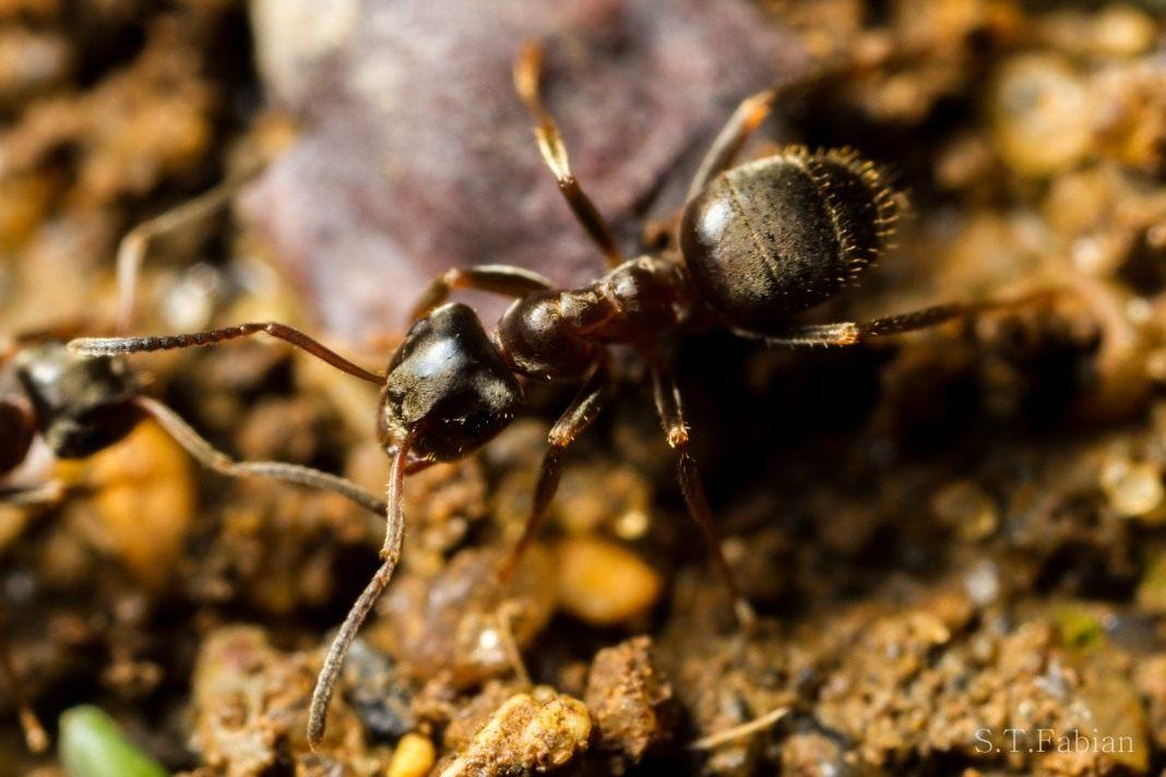 Способы борьбы с муравьями в саду и огороде