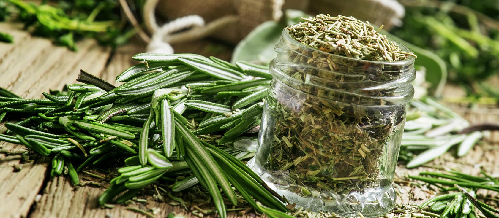 Какой запах у розмарина: уникальные свойства аромата