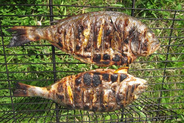 Сибас на гриле - рецепт
