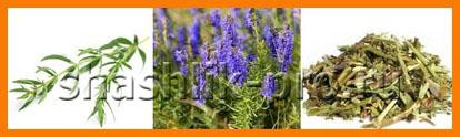 Иссоп лекарственный, его полезные свойства и противопоказания, применение в кулинарии, медицине. уход и выращивание из семян