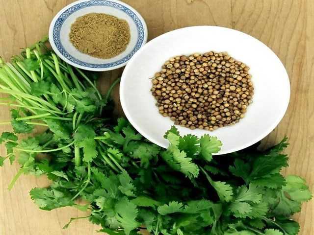 Приправа кориандр — как использовать и в какие блюда добавлять