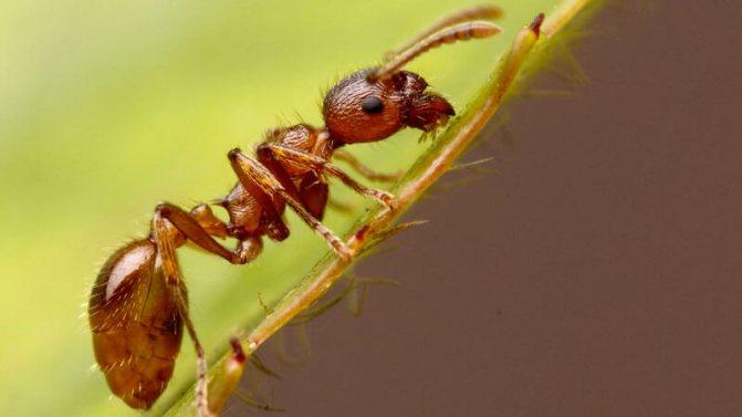 Как избавиться от муравьев на даче | 100+ идей !!!