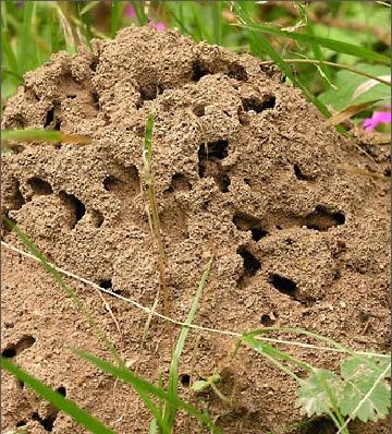 Как избавиться от муравьев на даче: несколько способов