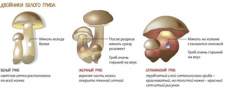 Весенние грибы: названия, описание, где растут и когда собирать