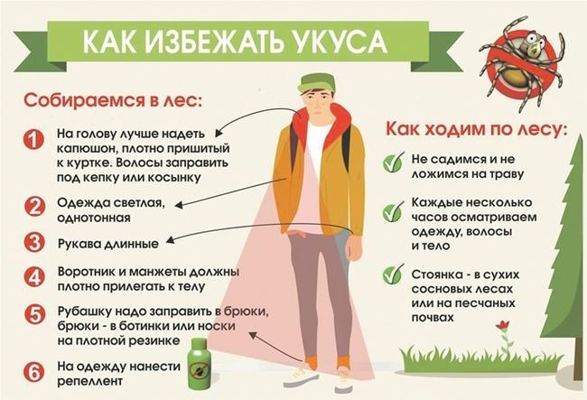 6 эффективных народных методов, которые помогут защититься от клещей
